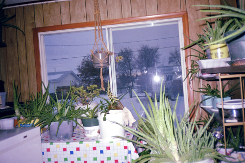 view 1 of my Sunroom full of aloe vera in my parents' home