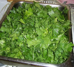parsley leaves washed and ready to spread for drying