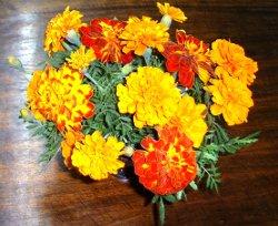 French Marigolds