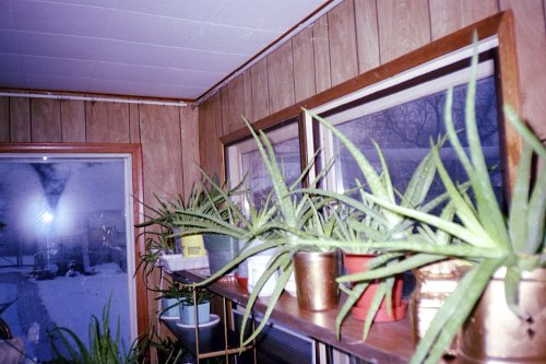this was the north side of the sunroom