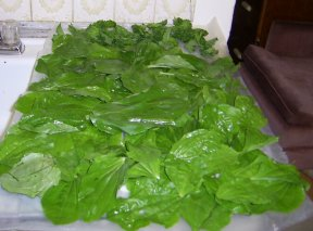 plantain leaves, washed and ready to dry
